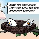 Separated at bird