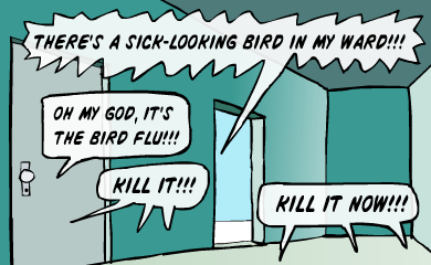 There's a sick-looking bird in my ward! Oh my God, it's the bird flu!!! Kill it!!! Kill it now!